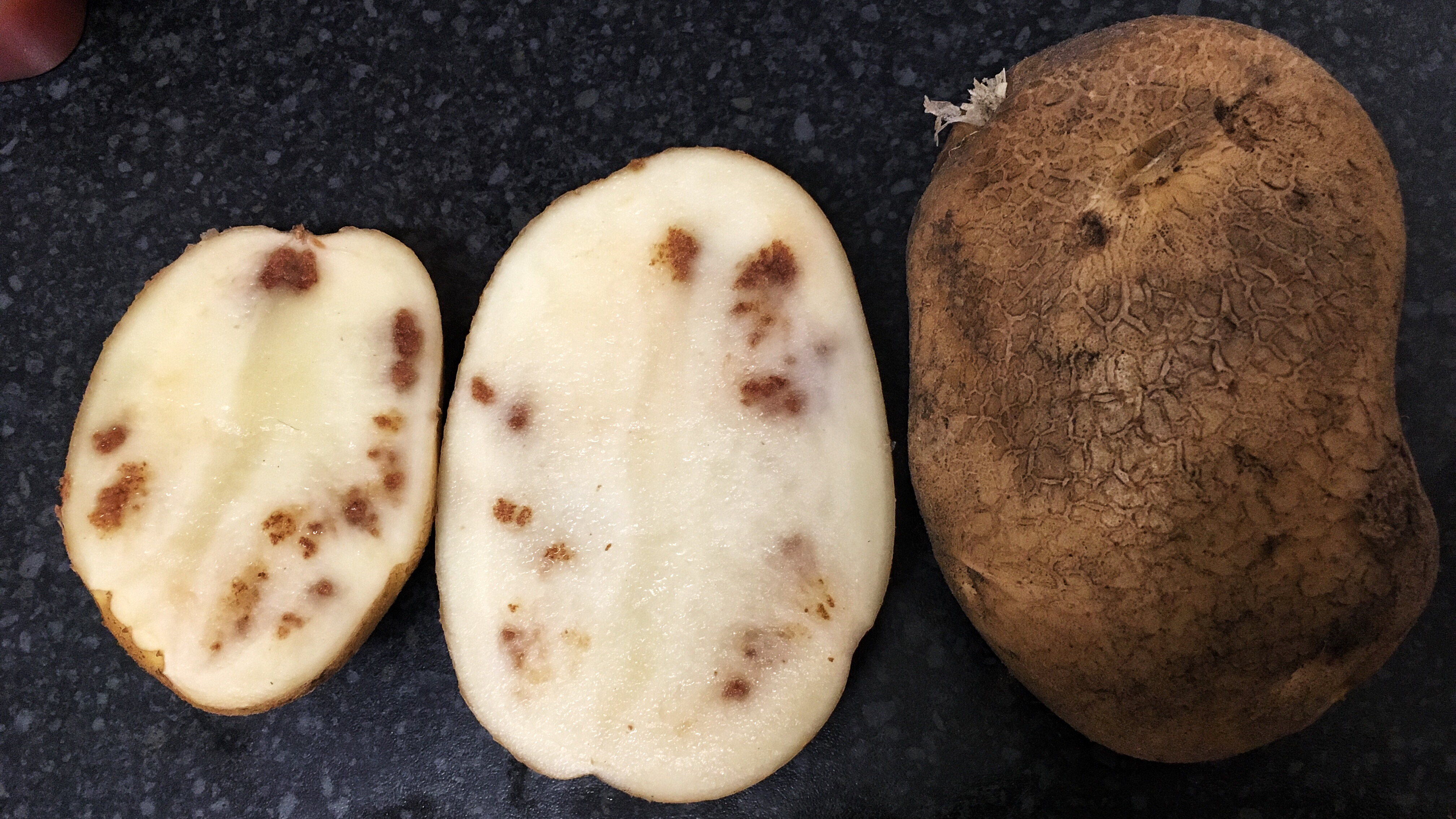 A Home Guard potato sliced in half to reveal inedible brown patches