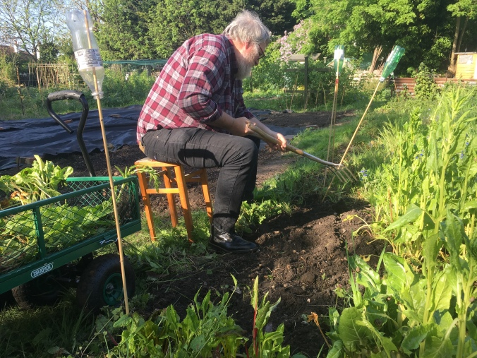 Andrew clearing a patch of the allotment